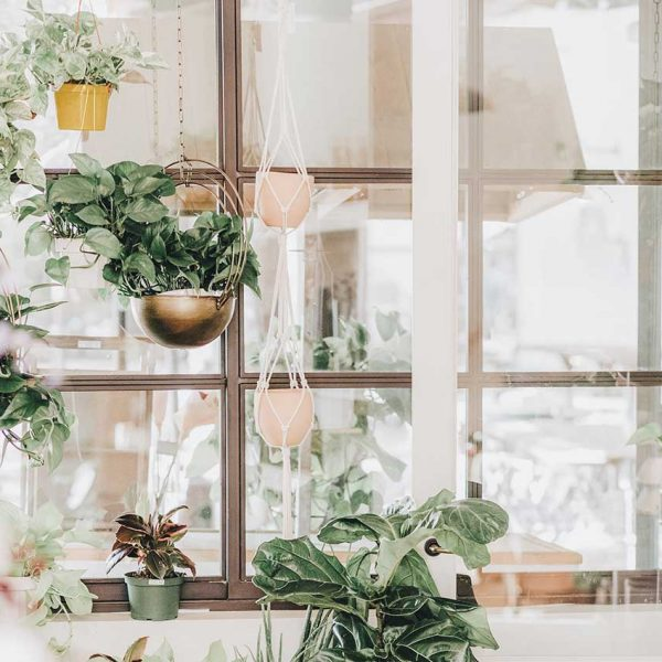 A good eco-friendly wedding décor alternative is to have potted plants at your wedding. Like these hanging planters in front of a shop window.